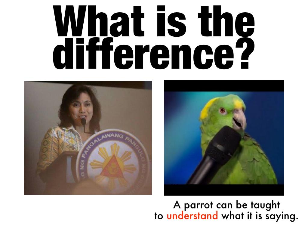 parrot-001